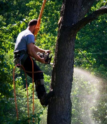 Tree Stump Removal in Bracken Ridge
